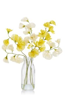 Sweet Pea In Glass Vase