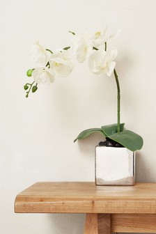 Real Touch Orchid In Ceramic Pot
