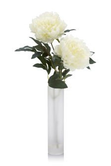 White Peonies In Frosted Glass Vase