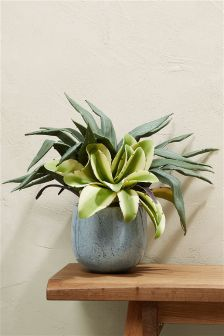 Mixed Aloe Ceramic Pot