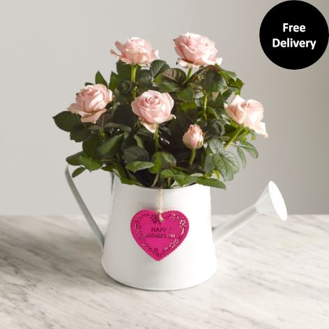 Mother's Day Pink Rose Gift