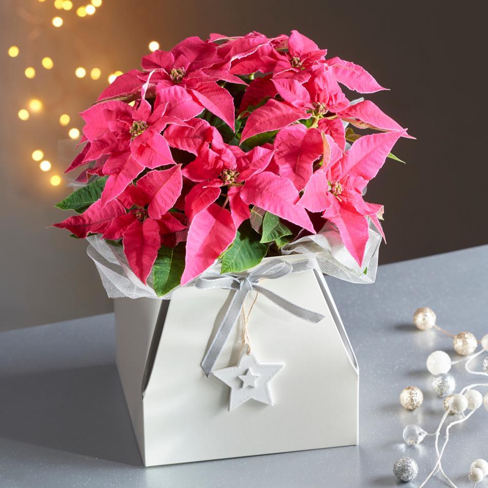 Pink Princettia Gift Bag with Chocs