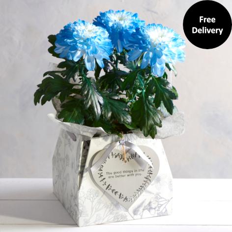 Blue Chrysanthemum Gift Bag