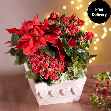 Christmas Festive Planter